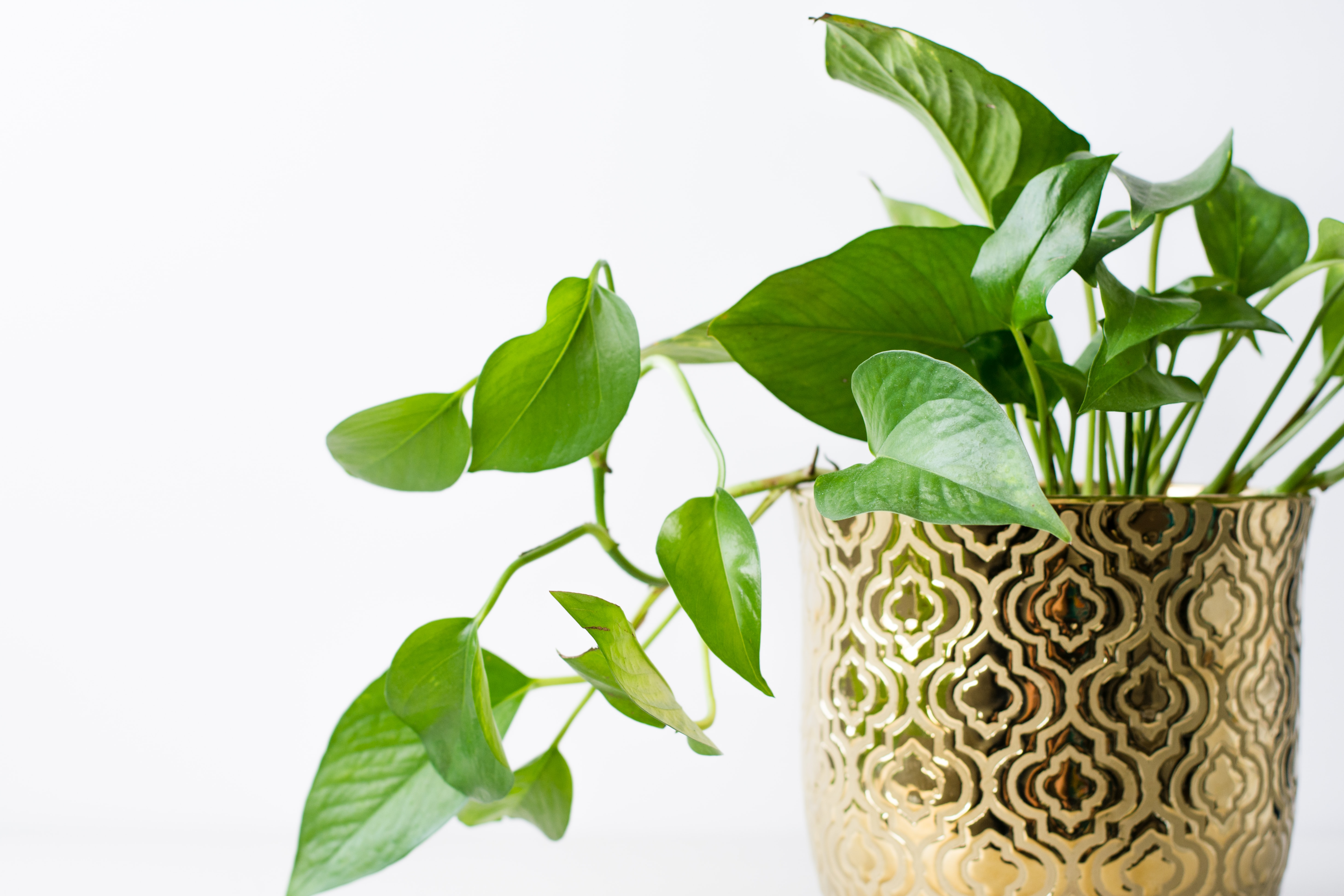 10 piante da appartamento che richiedono poca luce e poche cure