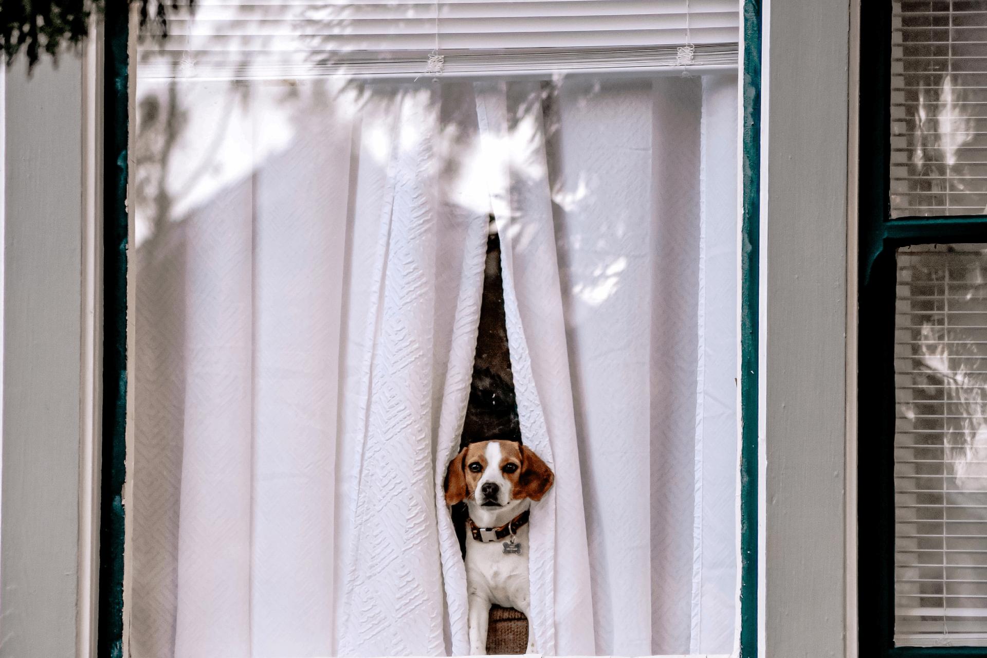 ¿Por qué son importantes las alarmas para casa?
